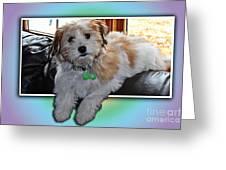 Yoshi Havanese Puppy Greeting Card by Barbara Griffin