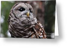 You Can Call Me Owl Greeting Card