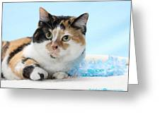You Had Me At Meow..... Greeting Card