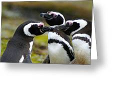 You May Kiss The Bride - Penguins Greeting Card