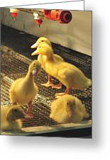 You Talkin To Me? Farm Show Harrisburg Pa  Greeting Card