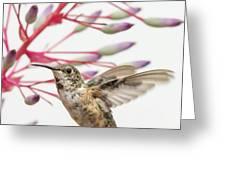 Young Allen's Hummingbird Greeting Card
