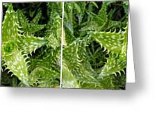 Young Aloe In Stereo Greeting Card