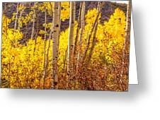 Young And Old Aspens Greeting Card
