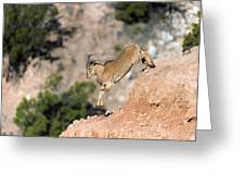 Young Auodad Sheep Descending The Canyon Greeting Card