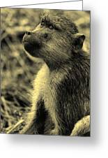 Young Baboon In Black And White Greeting Card
