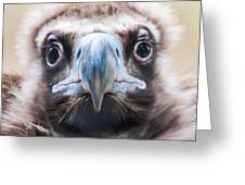 Young Baby Vulture Raptor Bird Greeting Card