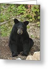 Young Bear 1 Greeting Card