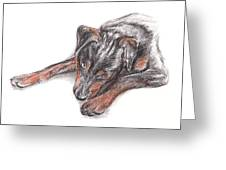 Young Black Dog Portrait Greeting Card