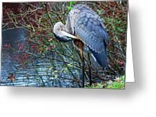 Young Blue Heron Preening Greeting Card