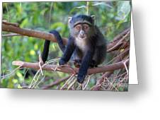 Young Blue Monkey Greeting Card