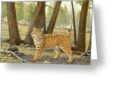 Young Bobcat    Greeting Card