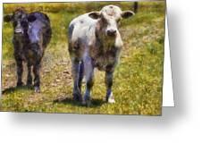 Young Bulls Greeting Card