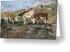 Young Cattle In Tyrol Greeting Card