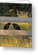Young Common Ravens Greeting Card