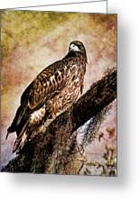 Young Eagle Pose II Greeting Card