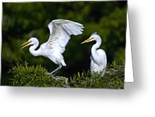 Young Egret Spreading His Wings Greeting Card