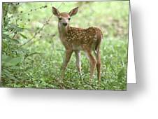 Young Fawn In The Woods Greeting Card