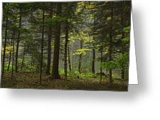 Young Forest Greeting Card