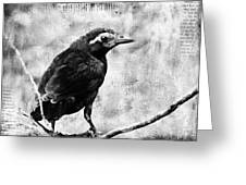 Young Grackle Greeting Card