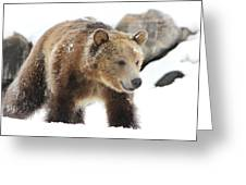 Young Grizzly Bear Greeting Card