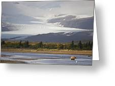 Young Grizzly Fishing At Hallo Bay Greeting Card