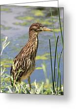 Young Heron Greeting Card