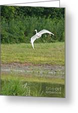 Young Heron In Flight Greeting Card