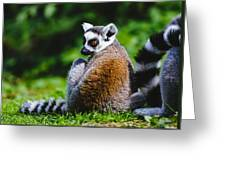 Young Lemur Greeting Card