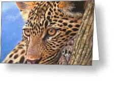 Young Leopard Greeting Card by David Stribbling