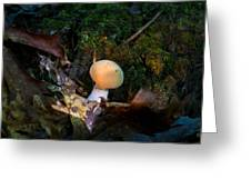 Young Lonely Mushroom 2 Greeting Card