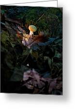 Young Lonely Mushroom Greeting Card