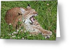 Young Lynx Yawning Greeting Card