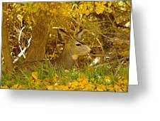 Young Male Buck Greeting Card