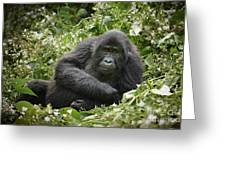 Young Mountain Gorilla Greeting Card