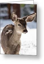Young Mule Deer Fawn In Yosemite National Park Greeting Card