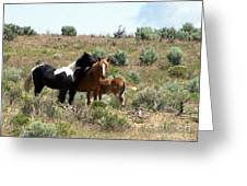 Young Mustang Band Greeting Card