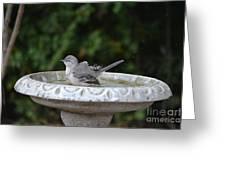 Young Northern Mockingbird In Bird Bath Greeting Card