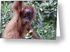 Young Orangutan Kiss Greeting Card