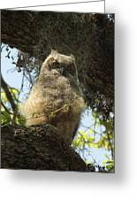 Young Owl. Greeting Card