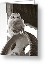 Young Owl On Wheel Greeting Card