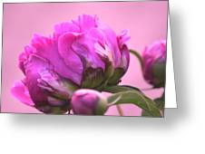 Young Peony I Greeting Card