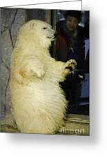 Young Polar Bear And Boy  Greeting Card
