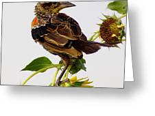 Young Redwing In The Wind Greeting Card