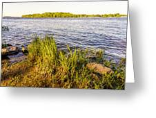 Young Reeds  Greeting Card