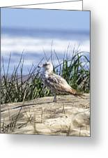 Young Seagull No. 2 Greeting Card