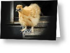 Young Silkie Greeting Card