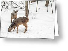 Young Spike Buck And Doe Whitetail Deer In Snowy Woods Greeting Card