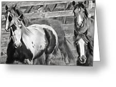 Young Stallions Greeting Card