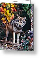 Young Timber Wolf Greeting Card